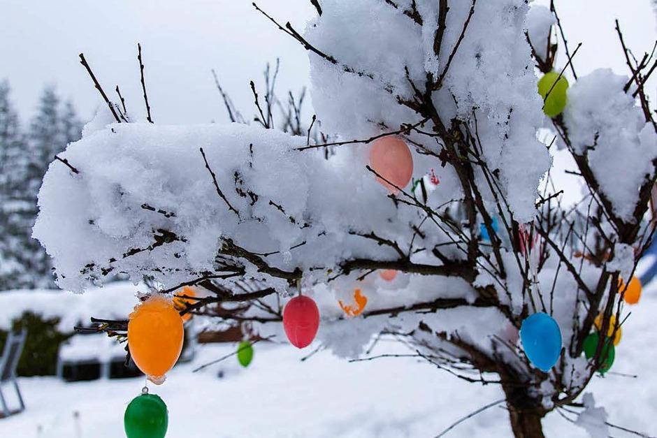 Mehrere Zentimeter Schnee liegen am Montag in Reitzenhain imErzgebirge (Sachsen) auf einem mit Kunststoff-Ostereiern geschmückten Baum. (Foto: dpa)