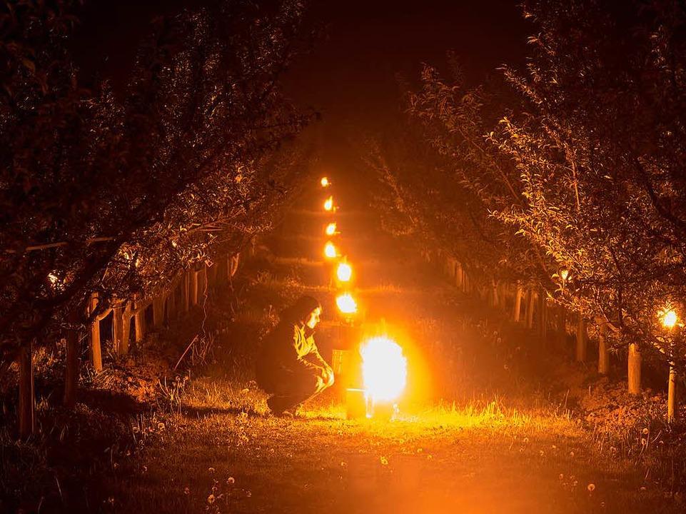 Wachskerzen in Eimern brennen bei Norsingen zwischen Pfirsichbäumen.  | Foto: dpa