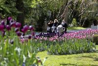 Tulpen zum Fest