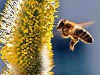 Schüller in Buchenbach sollen lernen, woher der Honig kommt