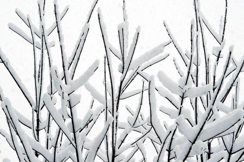 Schneebedeckt sind Äste am bei Titisee-Neustadt (Foto: dpa)