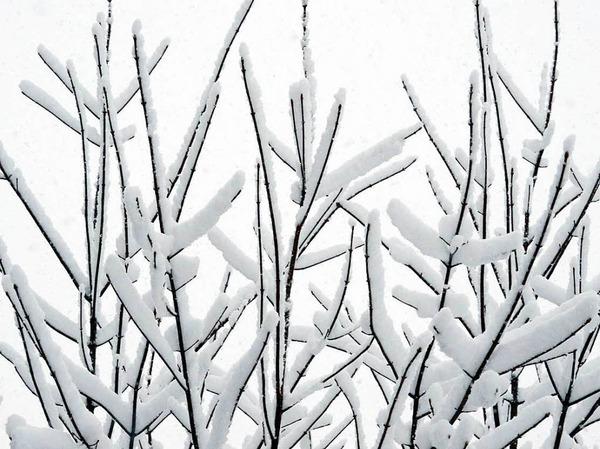 Schneebedeckt sind Äste am bei Titisee-Neustadt