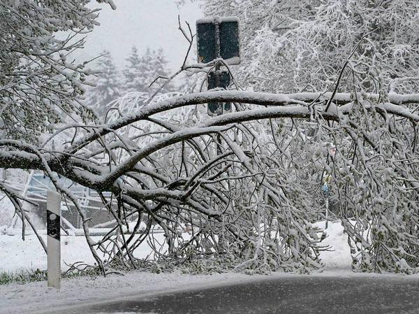 Ein Fahrzeug der Straßenmeisterei steht auf der B500 bei Schluchsee im Schwarzwald  vor einem umgestürzten Baum.
