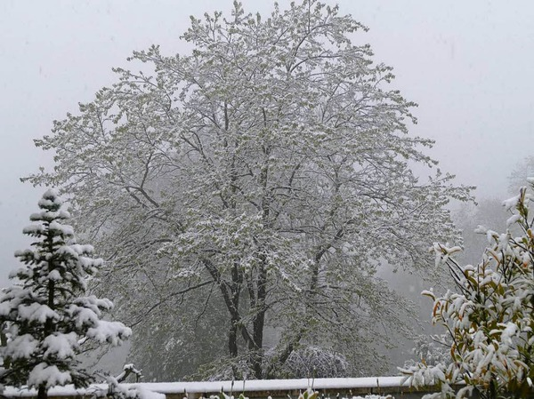 Schnee in Grenzach-Wyhlen