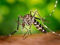 Ohne Förderung der Stadt droht die  Tigermücken-Plage