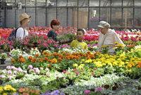 Beim Frühlingsfest war für Pflanzen- und Pferdefans viel geboten