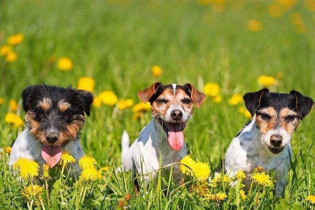 Hunde dürfen nicht auf die Landesgartenschau in Lahr