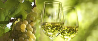 Am 28. Mai findet die 4. Ihringer Weinkost statt