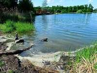 Dreckig und stinkend: Gesundheitsamt untersucht den Opfinger See