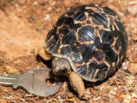 Winziger Schildkrötennachwuchs im Basler Zoo