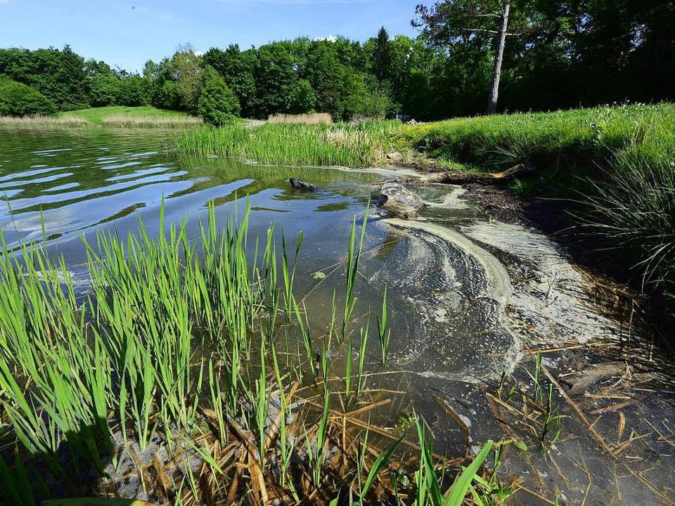 Der Opfinger Baggersee brachte in dieser Woche wenig Badenspaß.  | Foto: Ingo Schneider