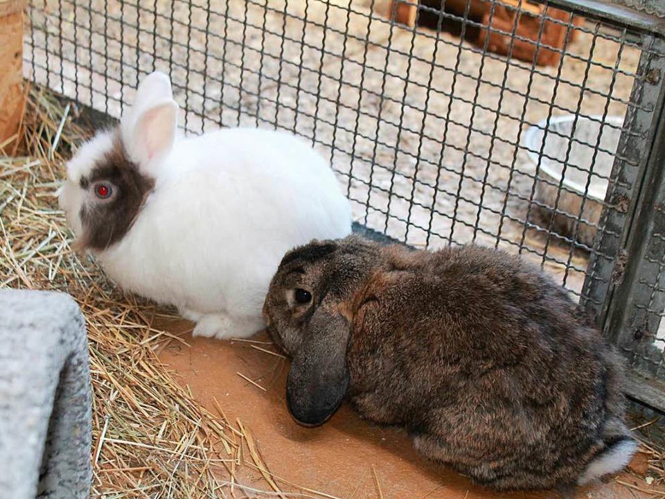 Ernie und Flocke  | Foto: privat