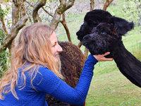 Alpakas fühlen sich im Kleinen Wiesental wohl