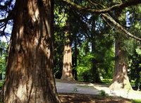 Baumkulturtage in Badenweiler