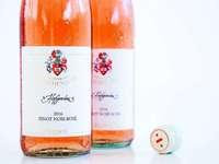 Volle Konzentration auf Burgunder beim Weingut Freiherr von Gleichenstein