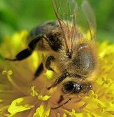 Detektivtag: Der Fall Honigbiene. In Grafenhausen