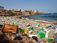 Welttag der Meere: Ein Ökosystem vor dem Kollaps