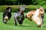 Fotos: Tag des Hundes in Waltershofen