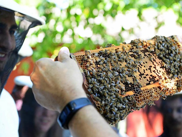 Führung im Bienenhaus am Mundenhof