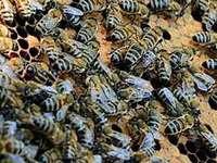 Summa summarum ein informativer Bienentag auf dem Mundenhof