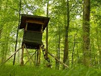 Jäger stürzt bei Schlächtenhaus von angesägtem Hochsitz