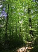 """Wanderung des BUND zum Thema """"Von Wald zu Beton: Das Landschaftsschutzgebiet am Salzert"""""""