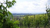 Weinbau, Wiesen und weite Blicke