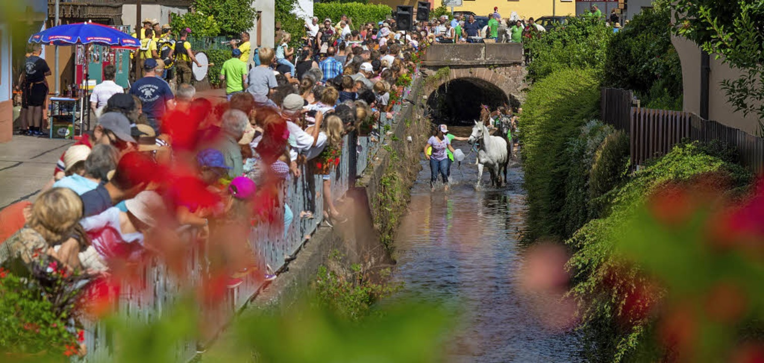Die Zuschauer verfolgten die Pferdewäsche neugierig.   | Foto: Olaf Michel
