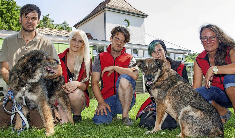 Das Team vom Tierheim Steinatal freut ...ünfjährigen Mischlingen Gogu und Feti     Foto: Peter Rosa
