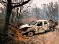 Waldbrände in Portugal: Ist der Eukalyptus schuld?