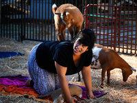Fotos: Entspannung beim Ziegen-Yoga in den USA