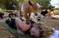 Entspannung mit Ziege auf dem Rücken