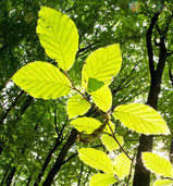 Wald ist wertvolles Gut für die Gemeinde