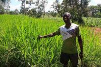 Wie Kenianer gegen die Armut ackern