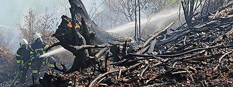 Waldbrandgefahr: Hochrisikogebiet von Freiburg bis Basel