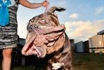 Fotos: Wettbewerb zum hässlichsten Hund der Welt