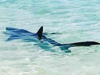 Hai-Alarm auf Mallorca: Badegäste in Angst