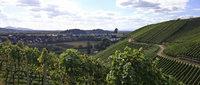 Wein, Wald und Wasser am Kandel