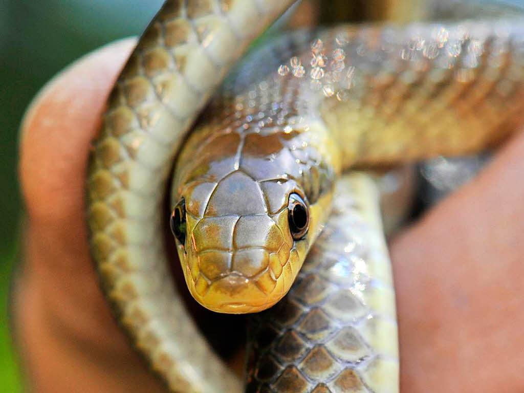 Vom Vormieter in Wohnung vergessen | Schlange beißt Frau - Klinik!