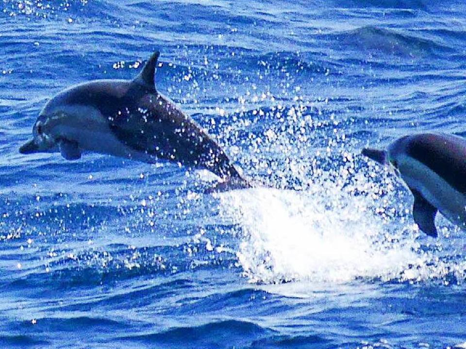 Glück gehabt und Delfine gesehen  | Foto: Geomar