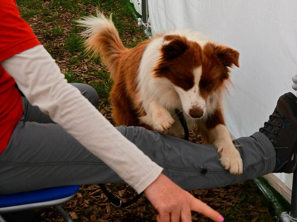 Besuchshund Nana springt über das ausgetreckte Bein der Hundeführerin    Foto: Danielle Hirschberger