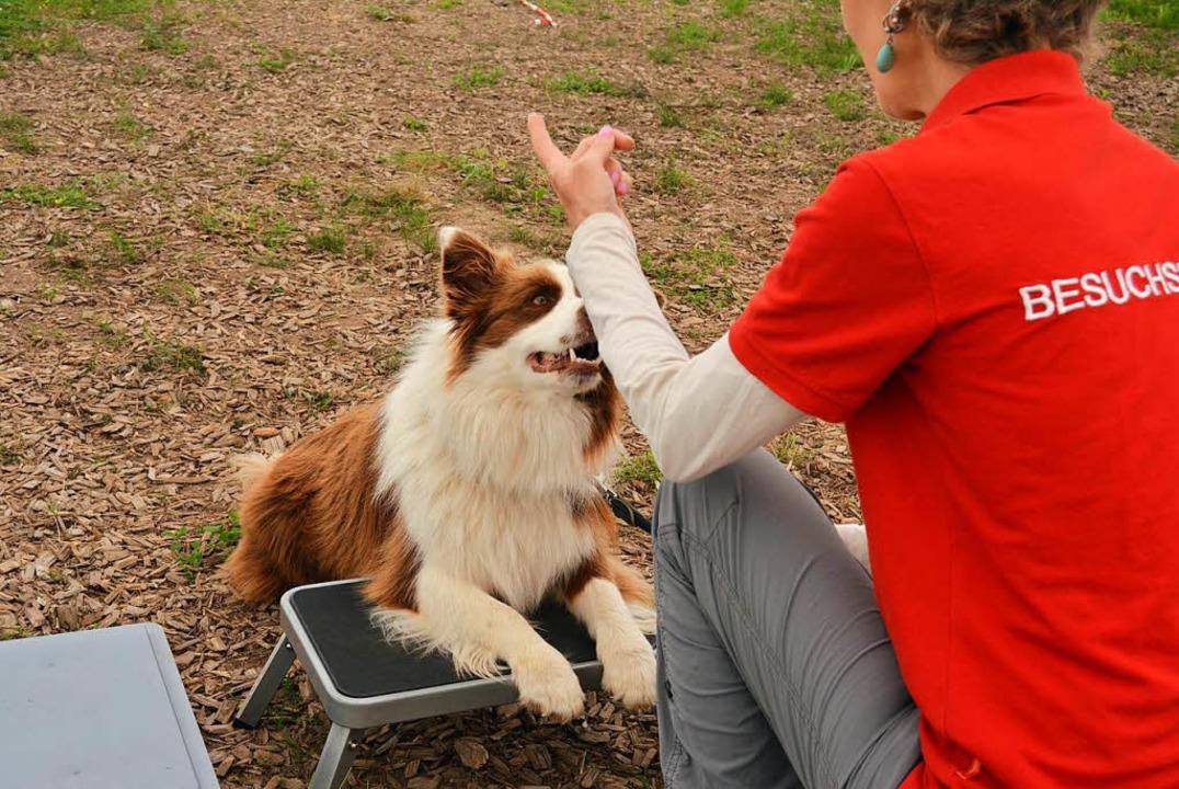 Besuchshund Nana legt die Vorderpfoten...uf, immer mit den Pfoten auf der Kiste    Foto: Danielle Hirschberger