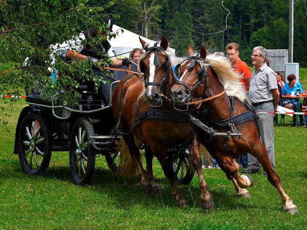 Dressur, Gelände und Geschicklichkeit standen auf dem Programm beim Fahrertag vom Reit- und Fahrverein in St. Märgen