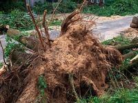 Kurzunwetter wütet in und um Steinen: Bäume entwurzelt