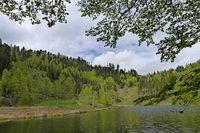 """BUND-Exkursion beim Nonnenmattweiher zum Thema """"Waldweide im Schwarzwald"""""""