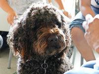 Welche Erfahrungen Schüler mit einem Klassenhund machen