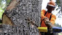 Baumschutzregeln jetzt für alle