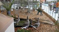 Jungtierschau mit Pokalschau mehrerer Kleintierzuchtvereine in Reute