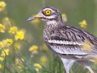 Neues Vogelschutzgebiet – Landwirte haben große Sorgen