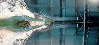 Es kracht im Schwimmteam